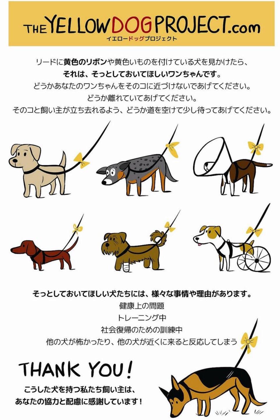エステティックサロン rinc。の美容ブログThe Yellow Dog Project最近の投稿最近のコメントアーカイブカテゴリーメタ情報